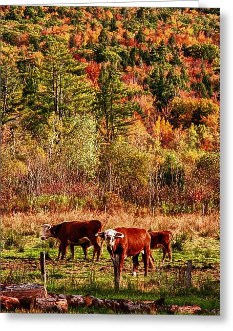 Greeting Card featuring the photograph Cow Complaining About Much by Jeff Folger