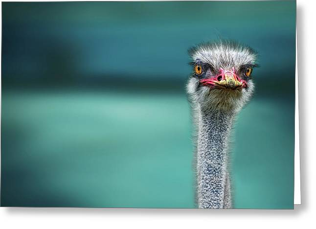 Ostrich Protecting Two Poor Chicken From The Wind Greeting Card