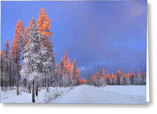 Other Side Of A Winter Sunset Greeting Card by David Andersen