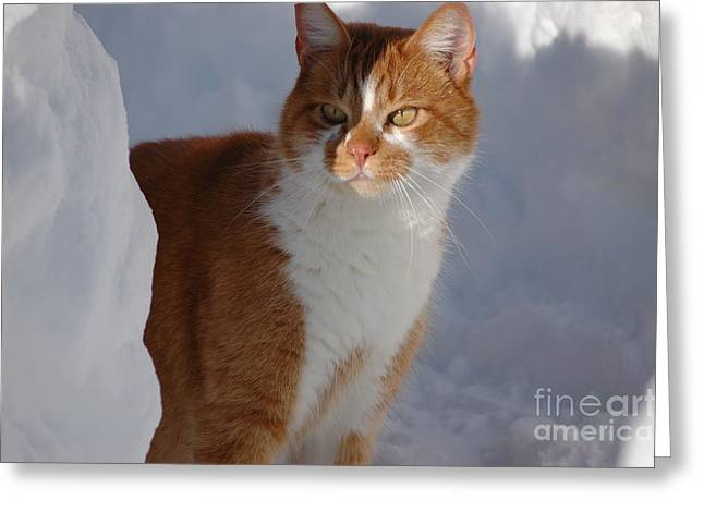 Greeting Card featuring the photograph Otis by Christiane Hellner-OBrien
