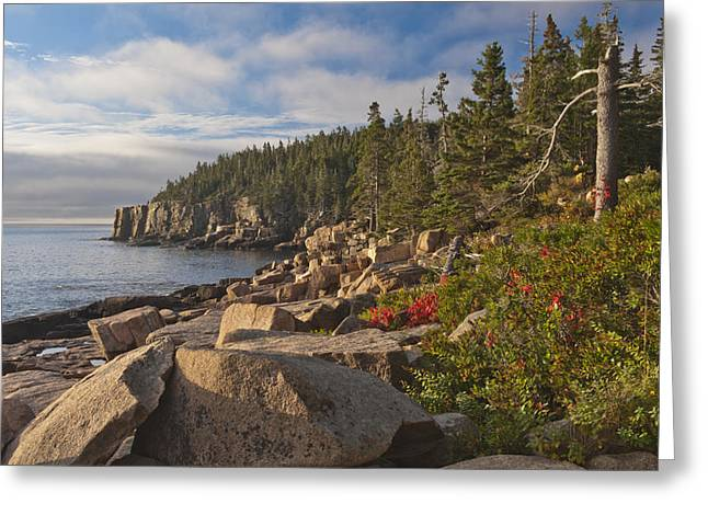 Greeting Card featuring the photograph Otter Cliff Morning by Rick Hartigan