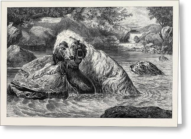 Otter Hounds, 1873 Greeting Card