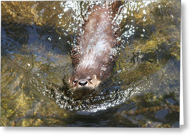 Otter In Florida Greeting Card