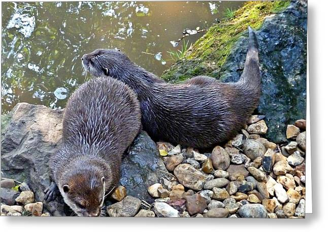 Otter Twins Greeting Card by Sharon Lisa Clarke