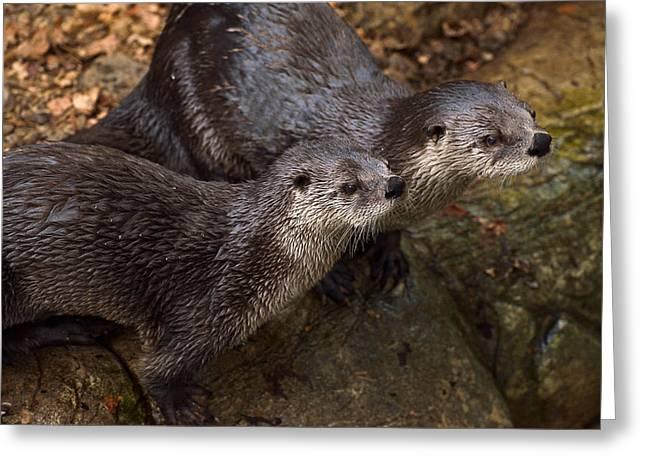 Otterhood Greeting Card by Joshua McCullough