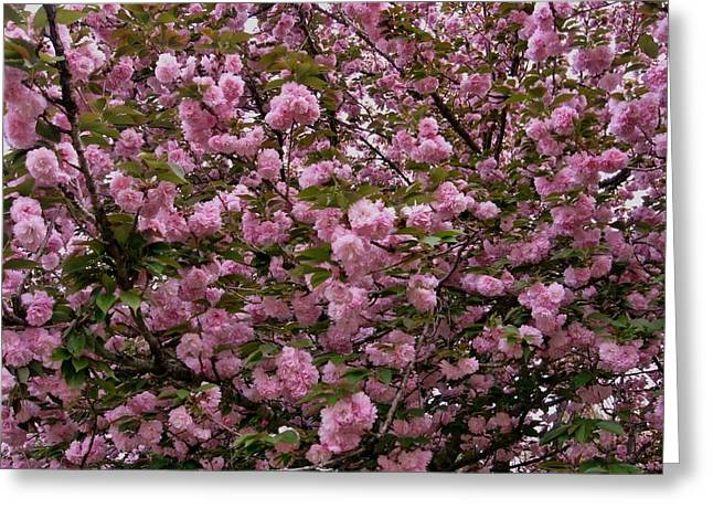 Our Cherry Tree Greeting Card by Mimi Saint DAgneaux