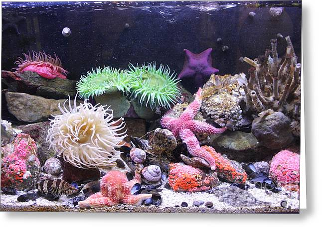 Our Colourful Underwater World Greeting Card