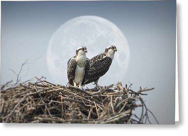 Our Little Nest Egg Greeting Card by Brian Wallace