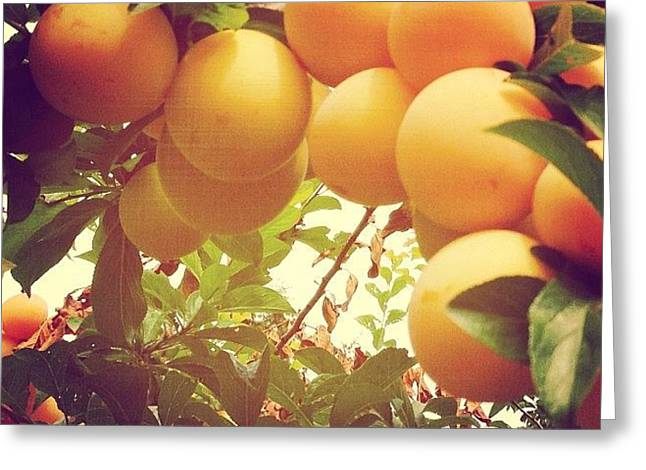 Our Plum Tree Is Loaded This Year...any Greeting Card