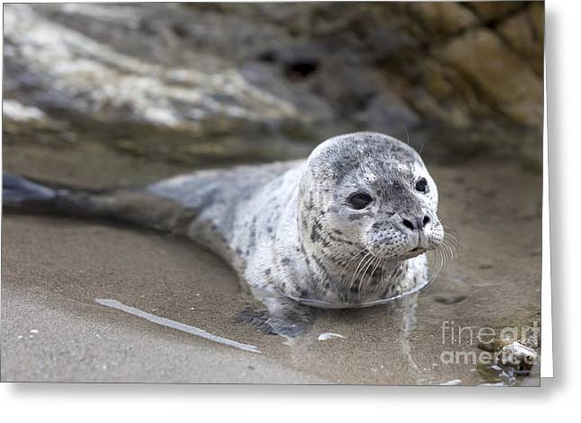 Out For A Swim Greeting Card by David Millenheft