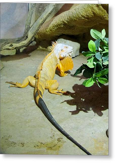 Out Of Africa Orange Lizard 2  Greeting Card
