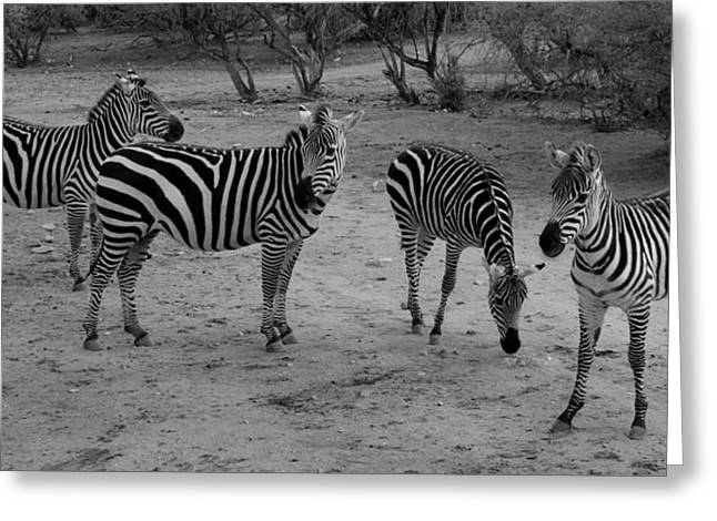 Out Of Africa  Zebras Greeting Card