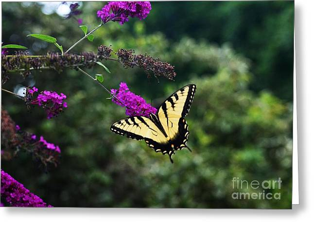 Greeting Card featuring the photograph Out Of Bounds by Judy Wolinsky