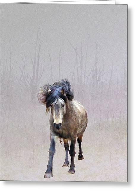 Out Of Nowhere Greeting Card by Patricia Keller