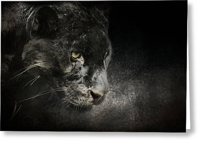 Out Of The Shadows - Wildlife - Black Leopard Greeting Card by Jai Johnson