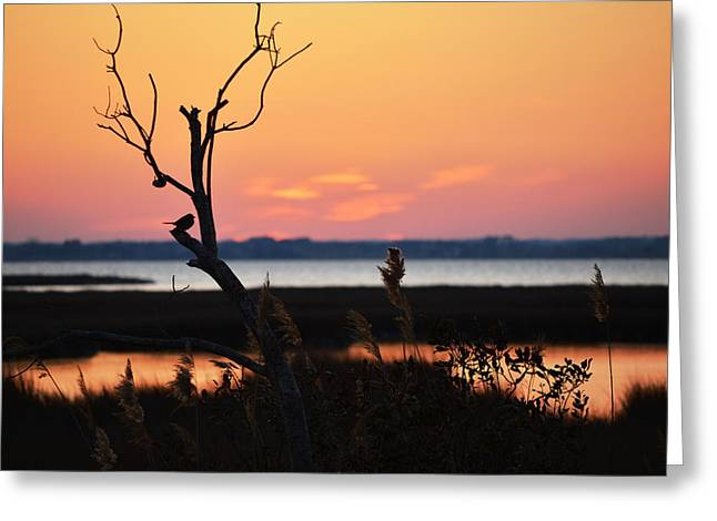 Greeting Card featuring the photograph Ocean City Sunset Out On A Limb by Bill Swartwout