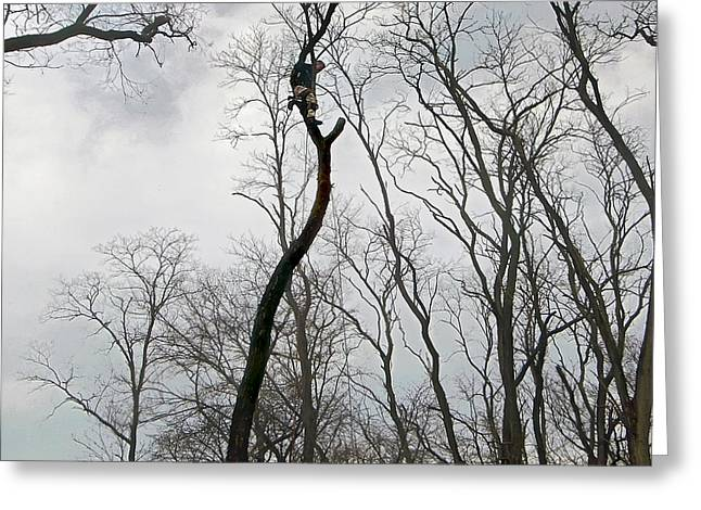Out On A Limb Greeting Card by Brian Wallace