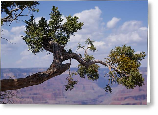 Out On A Limb Greeting Card by David Nichols