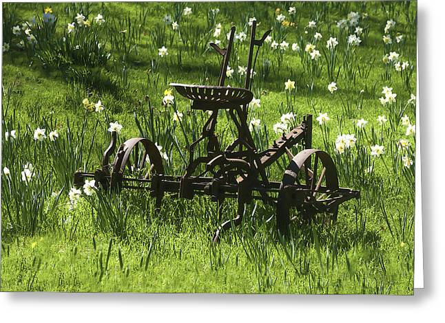 Greeting Card featuring the photograph Out To Pasture 2 by Sherri Meyer