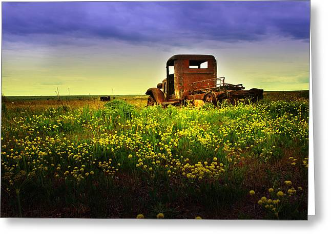 Out To Pasture Greeting Card by Sonya Lang