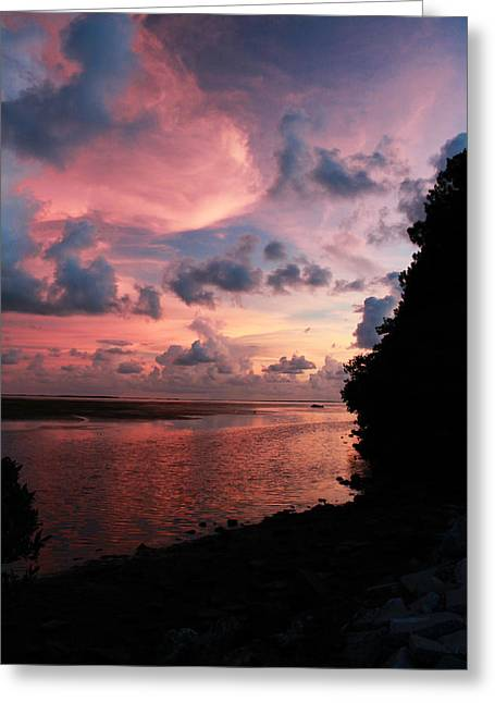 Out With A Roar Sunset Over Water Tarpon Springs Florida Greeting Card by Robin Lewis