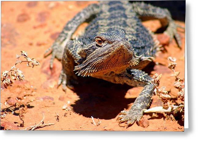 Greeting Card featuring the photograph Outback Lizard 2 by Henry Kowalski