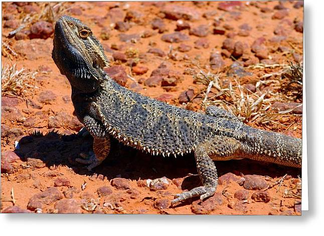 Greeting Card featuring the photograph Outback Lizard by Henry Kowalski