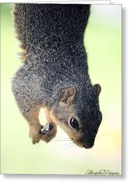 Outdoor Life - Squirrel 2 Greeting Card by Angela Rogers