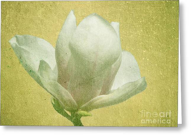 Outer Magnolia Greeting Card by Jeff Kolker