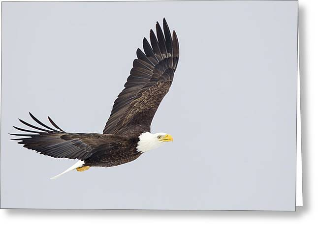 Outstretched Greeting Card by John Blumenkamp