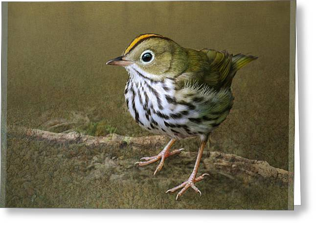 Ovenbird On Soft Ground Greeting Card by R christopher Vest