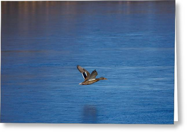 Over Frozen Pond Greeting Card by Ernie Echols