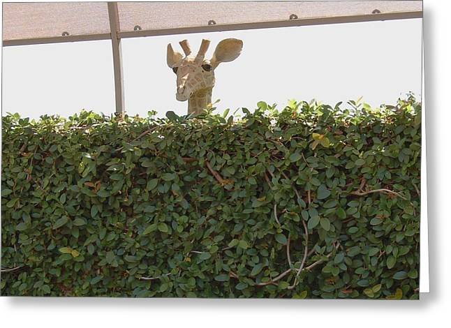 Over The Hedge Greeting Card by Linda Brody