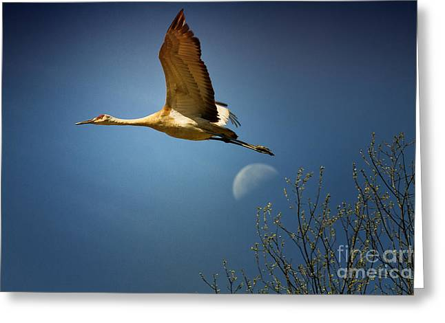 Over The Moon Greeting Card by Todd Bielby