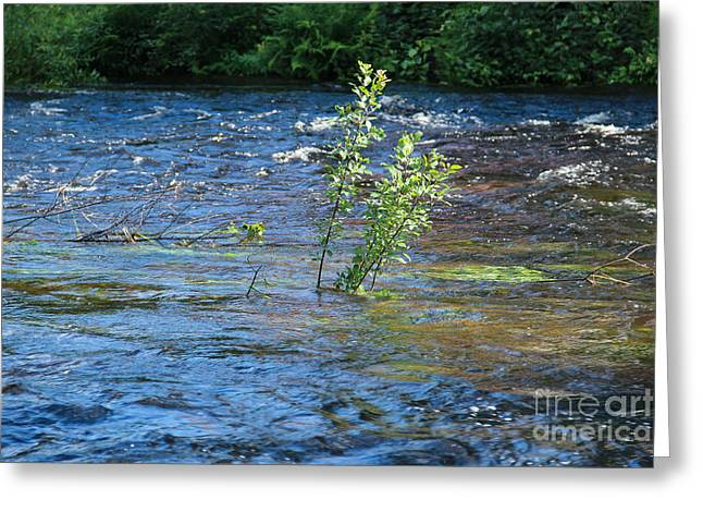 River Flooding Greeting Cards - Overflowing rapid river Greeting Card by Kerstin Ivarsson