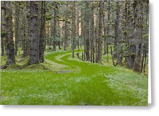 Overgrown Old Road Through Spruce Greeting Card by Kevin Smith