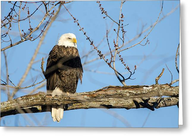 Greeting Card featuring the photograph Overlooking Freedom by Steven Santamour