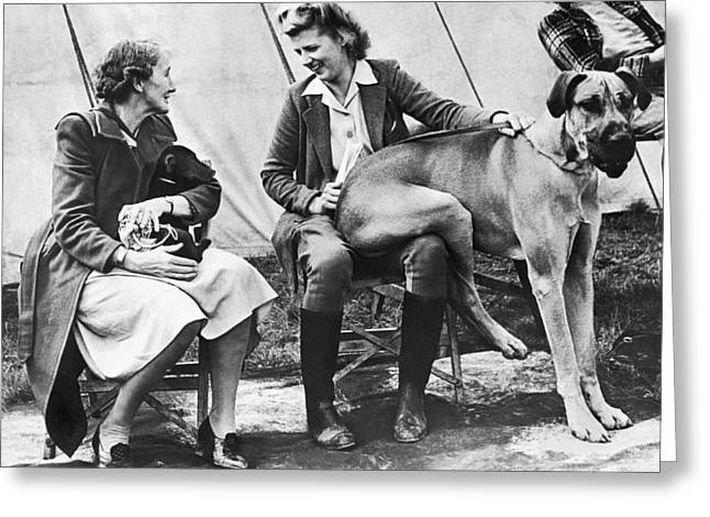 Oversized Lap Dog Greeting Card by Underwood Archives