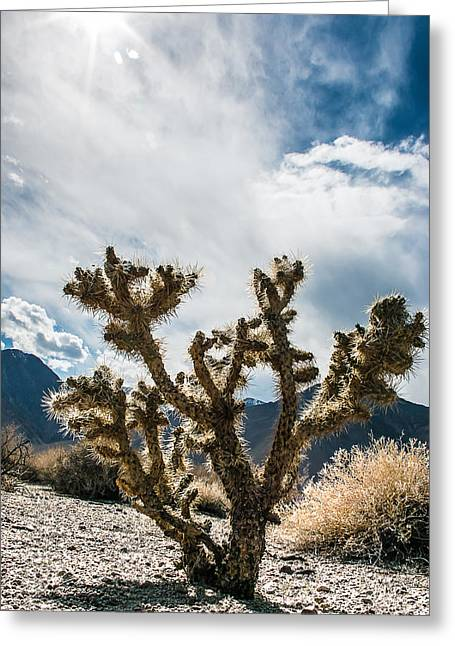 Owens Valley Cholla Greeting Card