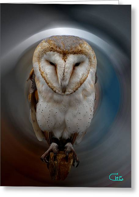 Greeting Card featuring the photograph Owl Alba  Spain  by Colette V Hera  Guggenheim