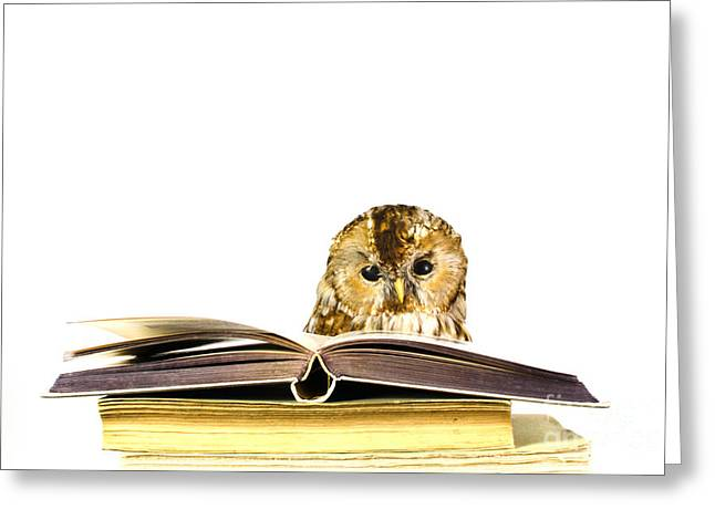 Owl At A Stack Of Books Greeting Card