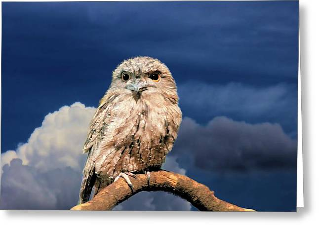 Owl At Dusk Greeting Card