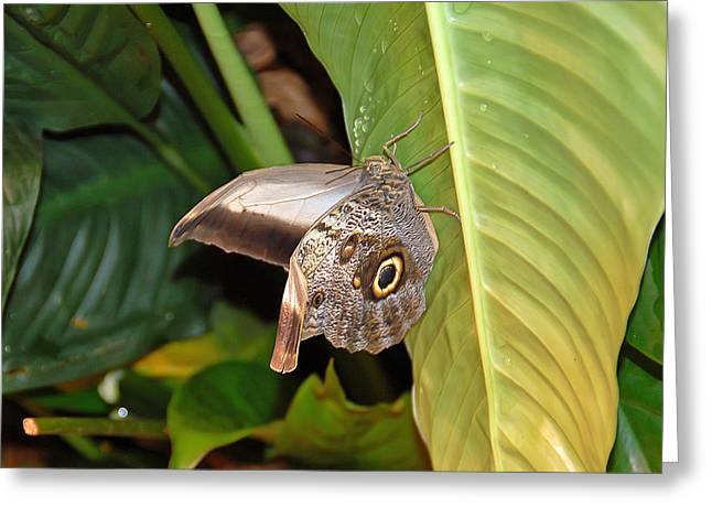 Owl Butterfly Greeting Card by Aimee L Maher Photography and Art Visit ALMGallerydotcom