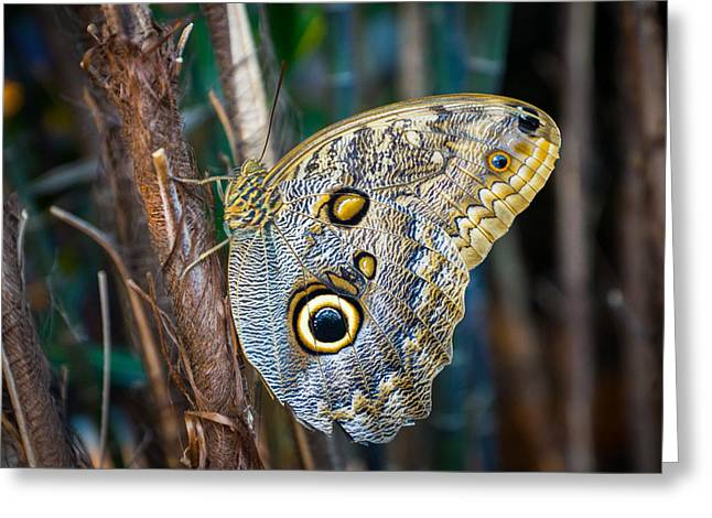 Owl Butterfly Greeting Card by Bill Pevlor