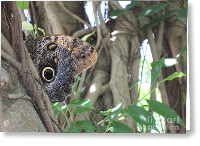 Owl Butterfly In Hiding Greeting Card