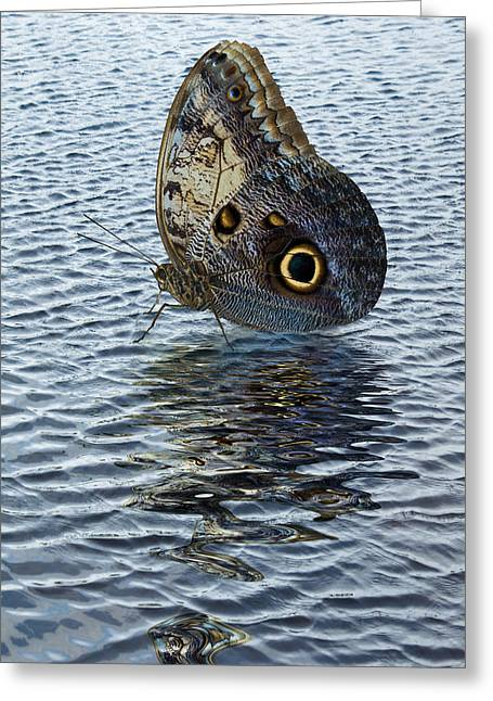 Greeting Card featuring the photograph Owl Butterfly On Water by Jane McIlroy