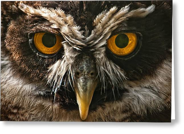 Owl Greeting Card by Chris Boulton