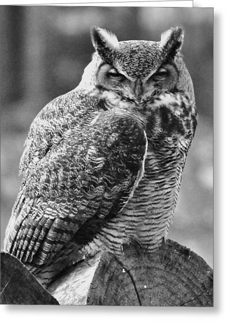 Owl In Black And White Greeting Card