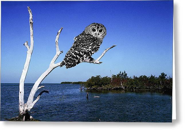 Owl In Dead Tree Greeting Card