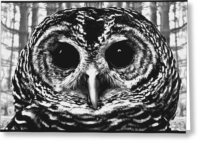 Owl In Woods Greeting Card